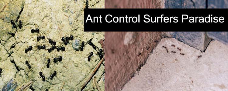 Ant Control Surfers Paradise