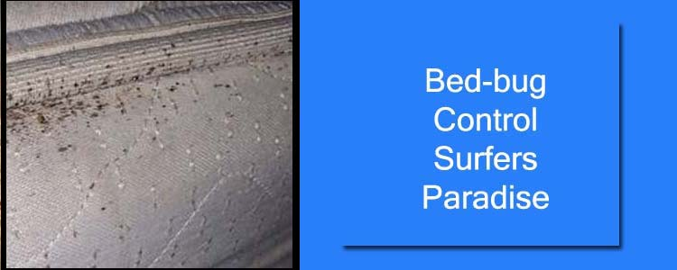 Bed Bug Control Surfers Paradise